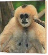 No Monkey Business Wood Print