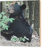 Bear - Cubs - Mother Nursing Wood Print
