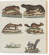 Noble Furs Wood Print