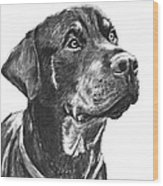 Noble Rottweiler Sketch Wood Print