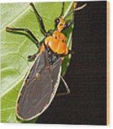 Nocturnal Bug Wood Print