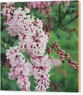 Nocturne Lilac Flowers Wood Print