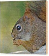 Nom Nom Squirrel  Wood Print