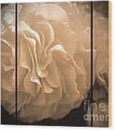 Non-stop Begonia Triptych Wood Print