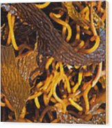 Noodles Of The Sea Wood Print by Gwyn Newcombe