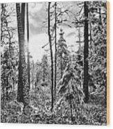 Noon Wood Print