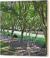 Norfolk Botanical Garden 3 Wood Print