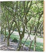 Norfolk Botanical Garden 7 Wood Print