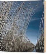 Norfolk Reeds Wood Print
