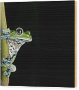 Norhayati's Flying Frog Wood Print