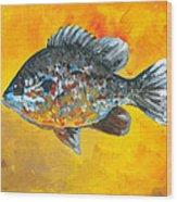 North America Sunfish Wood Print