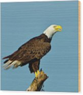 North America, Usa, Florida, North Fort Wood Print