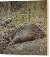 North American Beaver Wood Print