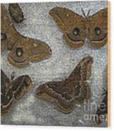 North American Large Moth Collection Wood Print