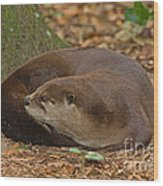 North American River Otter Wood Print