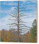 North Country Byway Wood Print