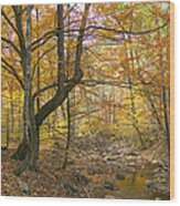 North Creek Autumn - Mid Afternoon - 04043 Wood Print by Byron Spencer