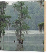 North Florida Cypress Swamp Wood Print