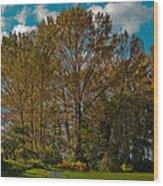 North Lions Park In Mount Vernon Washington Wood Print