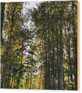 North Lions Park - Mount Vernon Washington Wood Print