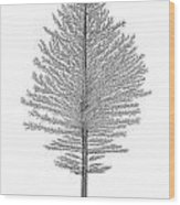 North Of America Wood Print