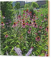 North Point Park Flowers Wood Print