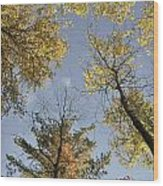 North Woods In The Fall Wood Print