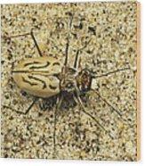 Northern Beach Tiger Beetle Marthas Wood Print