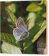 Northern Blue Wood Print