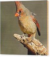 Northern Cardinal Cardinalis Cardinalis Wood Print