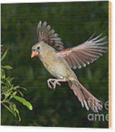 Northern Cardinal Hen Wood Print