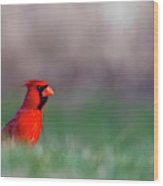 Northern Cardinal In Loup County Wood Print
