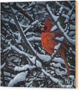 Northern Cardinal In Winter Wood Print