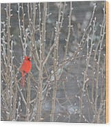Northern Cardinal -male Wood Print
