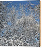 Northern Colors Wood Print