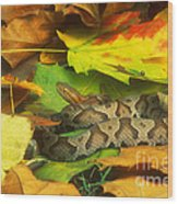 Northern Copperhead Camouflaged Wood Print