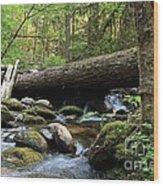 Northern Creek Wood Print by Tim Rice