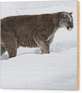 Northern Depths Cougar In The Winter Snow Wood Print by Inspired Nature Photography Fine Art Photography