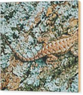 Northern Fence Lizard Wood Print