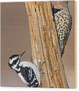 Northern Flicker And Hairy Woodpecker Wood Print by Jim Zipp