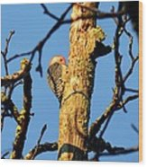 Northern Flicker At Sunrise Wood Print