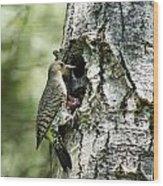 Northern Flicker Nest Wood Print