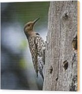 Northern Flicker Pictures 35 Wood Print