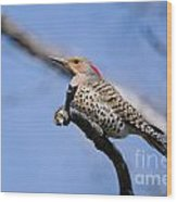 Northern Flicker Pictures 5 Wood Print
