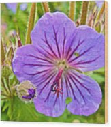 Northern Geranium By Transfiguration Of Our Lord Russian Orthodox Church In Ninilchik-ak Wood Print