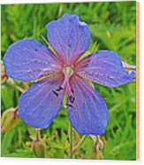 Northern Geranium In Jasper National Park-alberta  Wood Print