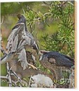 Northern Goshawk Brings Prey To Nest Wood Print