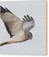Northern Harrier Hawk Hunting Wood Print