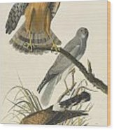 Northern Harrier Wood Print