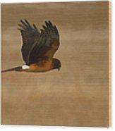 Northern Harrier Painterly Wood Print